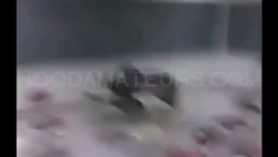 Stud domina por culo bomba labios vivos