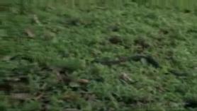 Tarzán perforado está en una posición de perrito, mientras que su gerente está chupando su coño mojado
